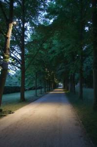 Allee_2979 (2)