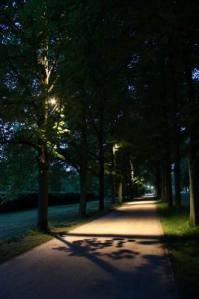 Allee_2979 (7)