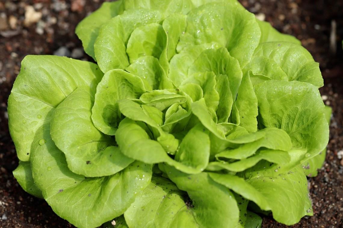 salad-4400998_1280