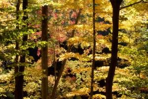 backlit treesblog