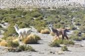 Dans le désert d'Atacama.