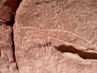 Pétropglyphe de renard, à Herbas buenas.