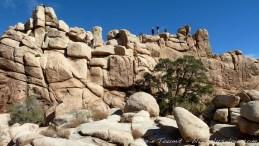 Joshua tree national park, Californie.
