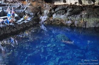 Les crabes, dans l'eau transparente.
