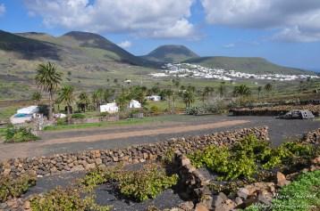 Haría, à Lanzarote (Canaries).