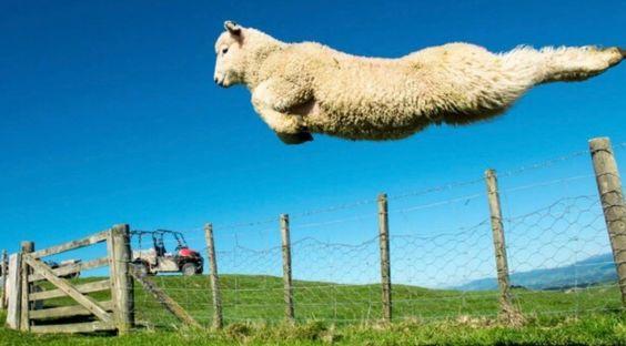 anecdotes sur la Nouvelle-Zélande