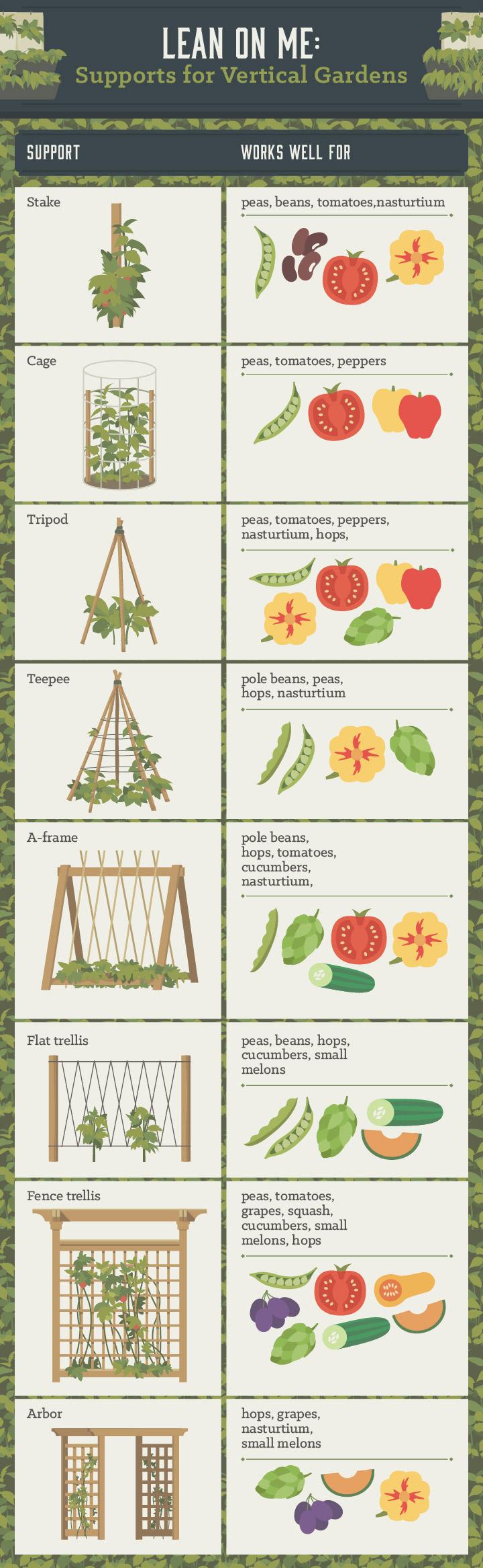 vertical vegetable garden - infographic
