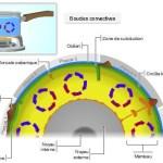 Boucle de convection – simulation, animation interactive
