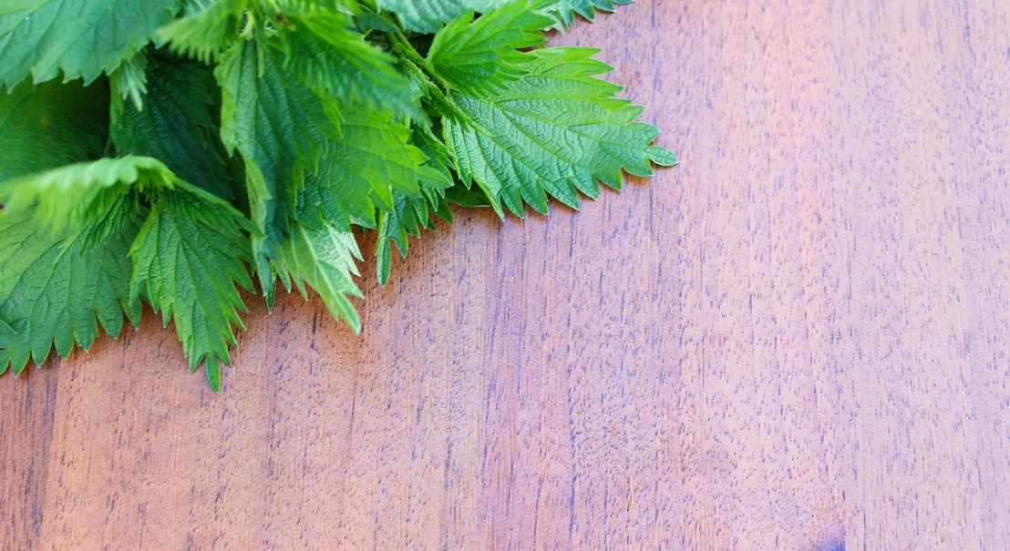 nettle-on-a-wooden-background-799938_1280(1)