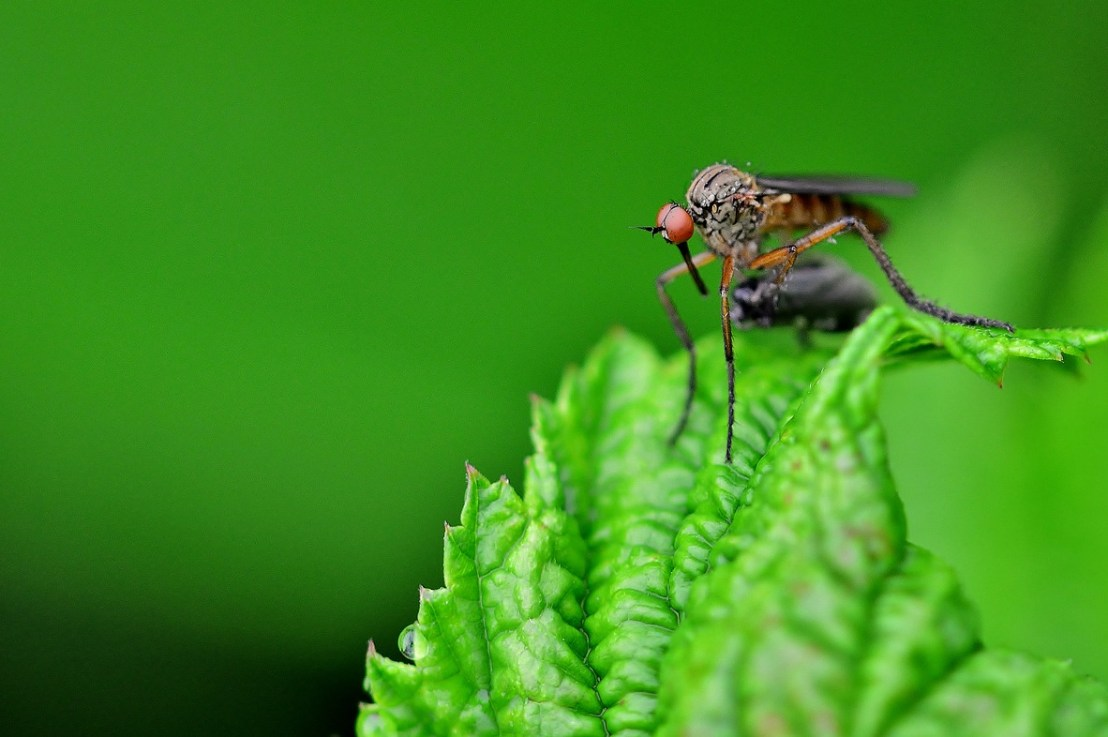 Quelles sont les plantes anti-moustiques ?