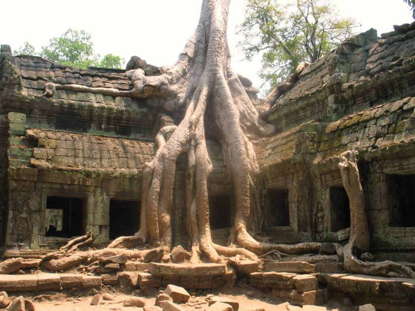 Tempel, Strände, Angkor Wat - Wurzel Tempel in Angkor Wat