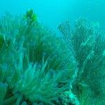 Findet Nemo in Thailand