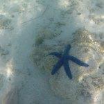 Seesterne auf Fiji