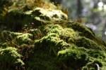 【高知で登山】初心者がおひとり様で梶ヶ森ハイキングに行ってきた感想^^! その2