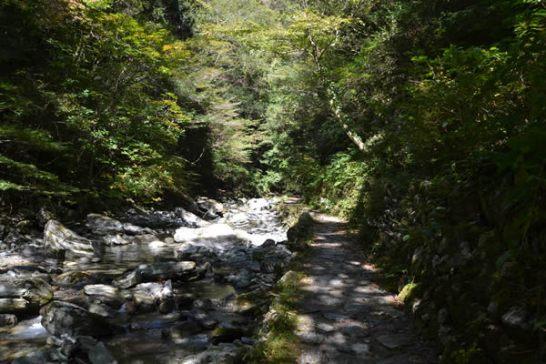 高知 仁淀川町 安居渓谷 滝 紅葉