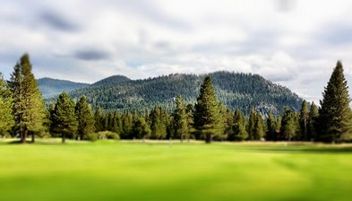 golf fairway with green grass and trees