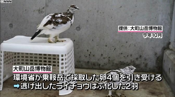 ニホンライチョウ2羽逃げ1羽未発見 長野 大町