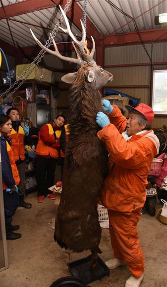 とらえた鹿の解体の仕方を生徒たちに教える猟師(手前)=長野市(三宅真太郎撮影)