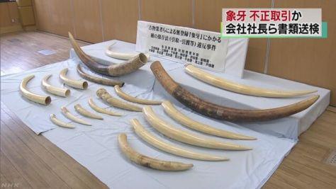 象牙の不正引き取り容疑 社長ら書類送検