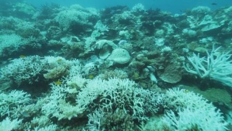 世界最北 対馬沖のサンゴ礁で「白化現象」初確認