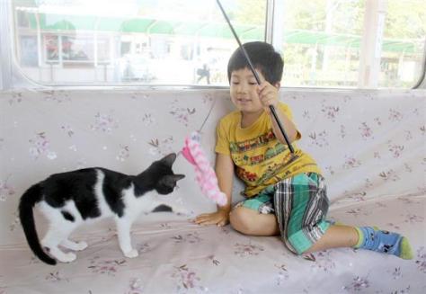 養老鉄道の「ねこカフェ列車」で子猫と遊ぶ乗客の男の子=10日、岐阜県養老町
