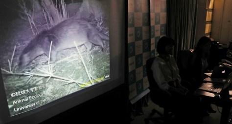 今年8月の記者会見で公開されたカワウソの映像=環境省で、佐々木順一撮影