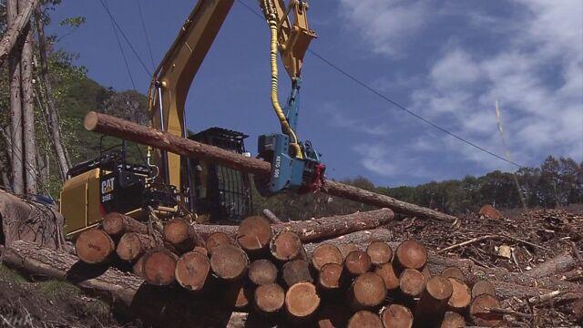 管理困難な民有林を意欲ある林業経営者に集約へ 林野庁