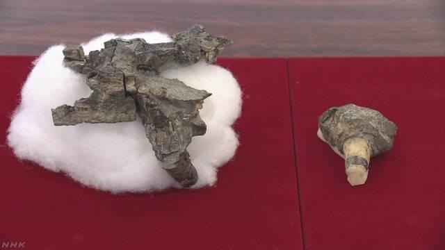 国内初 「ディキノドン類」の陸上の脊椎動物の化石 山口 美祢
