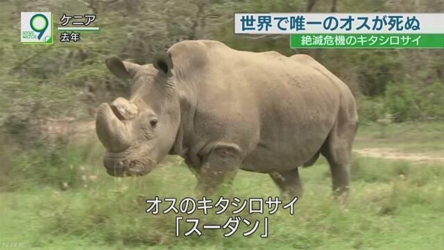 絶滅危機キタシロサイ最後のオス死ぬ メス2頭だけに ケニア