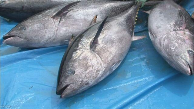 クロマグロ漁 初の漁獲停止を勧告 水産庁 | NHKニュース