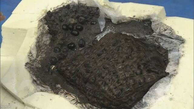 縄文時代のくるみ入りかご 完全な状態で見つかる 福島 南相馬 | NHKニュース