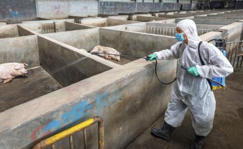 消毒される豚舎=8月、中国浙江省(共同)