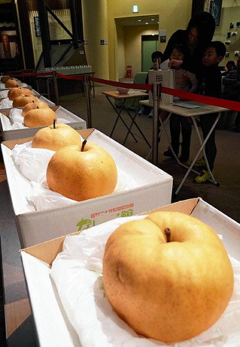 会場に展示された巨大な梨(鳥取県倉吉市で)
