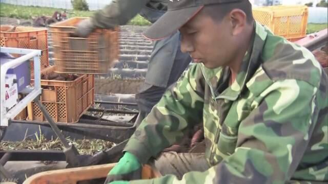 外国人材 農業と漁業「派遣」認める方針 仕事量が季節で変動