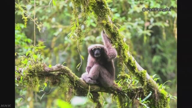 新種サルの名「スカイウォーカー」…映画の修行になぞらえて | NHKニュース