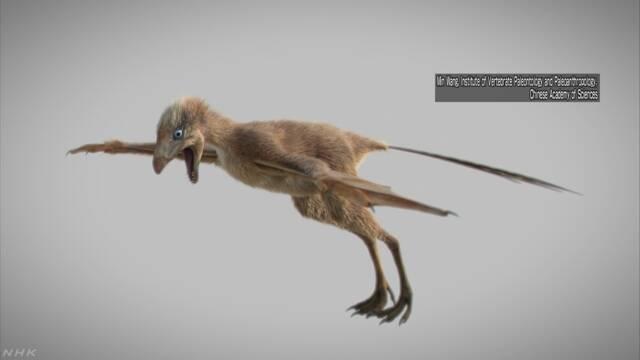 コウモリの翼持つ恐竜? 化石発見 中国 鳥への進化研究に一石 | NHKニュース