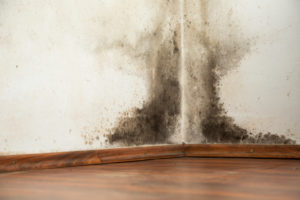 Tenant's Right to Withhold Rent after finding mold in their apartment