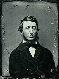 Henry David Thoreau, Bird Person