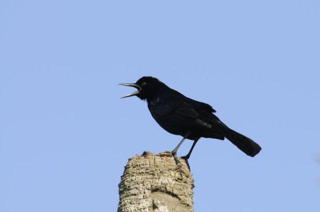 11-4-12-F01 [Mystery Bird A]