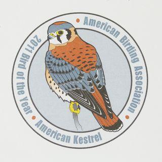 BOY AMKE logo lg 2