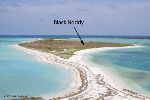 BlackNoddy_full_island19478