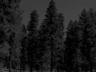 96 Night woods
