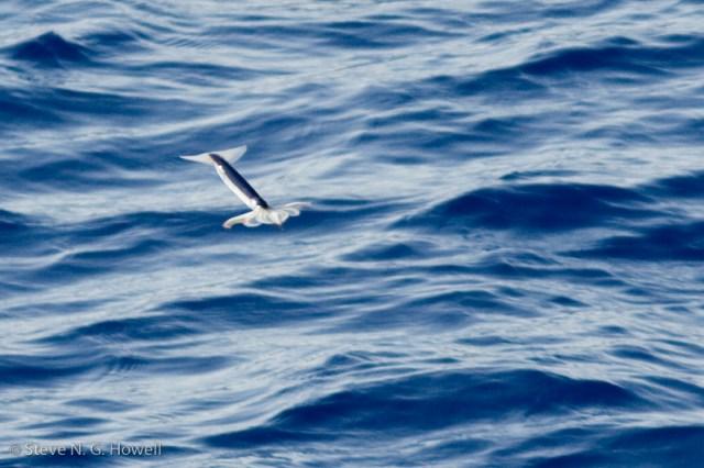 Fig 15 [flyingsquid]