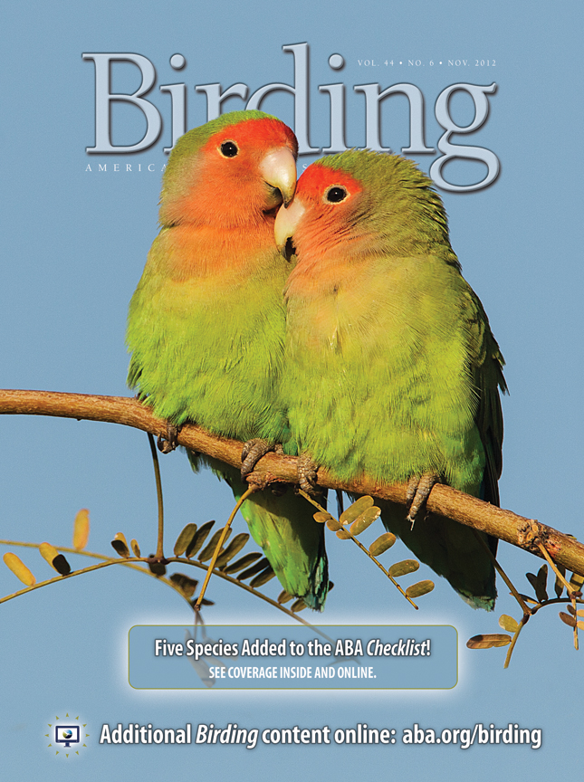 d2933d08668b Introducing the Rosy-faced Lovebird « ABA Blog