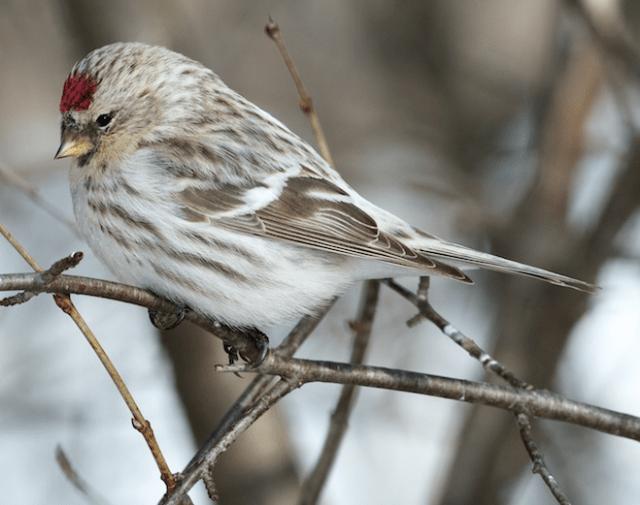 13-3-16-99 [Quiz Bird B]