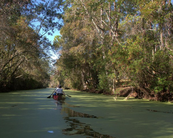 The Canal Run Trail at Okefenokee National Wildlife Refuge in Georgia. eBird data reflects that Rusties have been spotted at the refuge in the past. Photo: Steve Brooks.