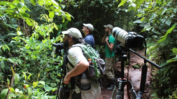 Big Day team members Seeholzer, Lane, and Angulo try to sneak a look at Rufous-capped Nunlets in the white sand forest of Aguas Verdes.
