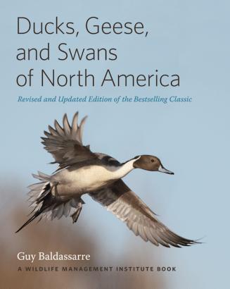 Baldassare Ducks, Geese and Swans