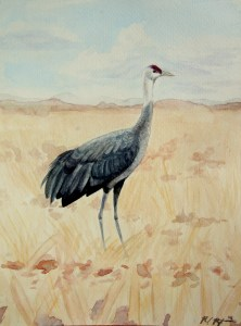 Hooded Crane. Watercolor on paper by © Rachel Rothberg. Young birder Rachel Rothberg has participated in ABA camps, contributed to ABA publications, and is active online with the ABA. ABA members' photos and art are extensively featured in the June 2015 Birding.