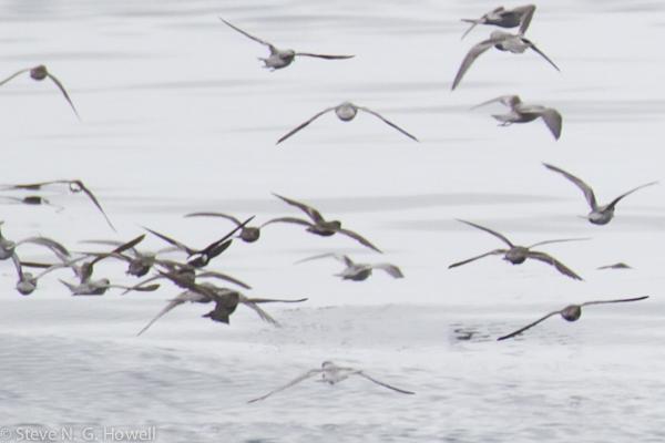 01 Bodega Bay pelagic, CA (248 of 320)